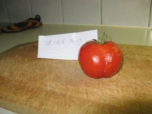 tomaat 18-7-2007 onder piramide  foto gemaakt 16-10-2007